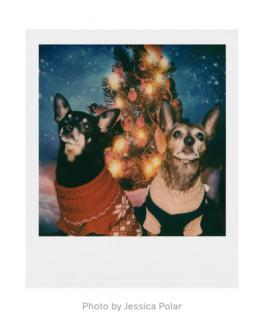 Polaroid Originals 600 Color Instant Film
